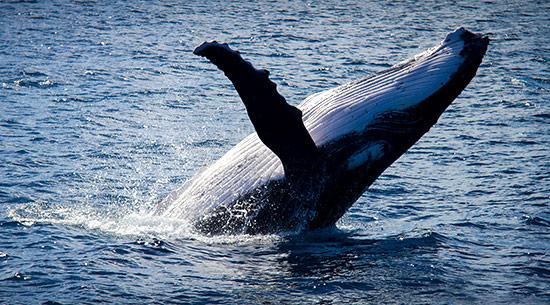 Orche e Balene